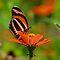 * Just Butterflies *