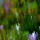Spring Blooms by Joanne  Bradley