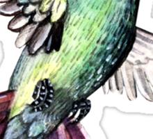 Bird hummingbird Sticker