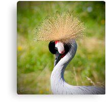 Crowned Crane bird Canvas Print