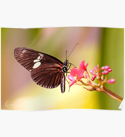Rainbow Butterfly Poster