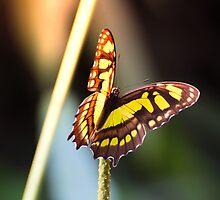 The butterfly effect by Richard Eijkenbroek