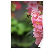 Ready for touchdown - The Bee and the Flower Poster