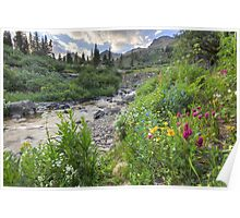 Colorado Wildflowers - Yankee Boy Basin Evening 2 Poster