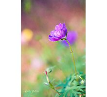 Proud Purple Cranesbill Photographic Print