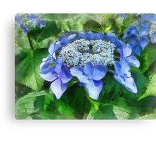 Blue Lace Cap Hydrangea Let's Dance Starlight Canvas Print