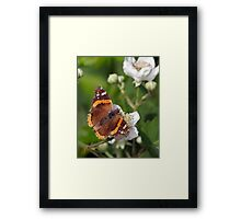 An Admirable Display of Colour Framed Print