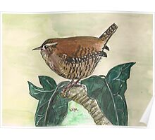 Wren on ivy leaves Poster