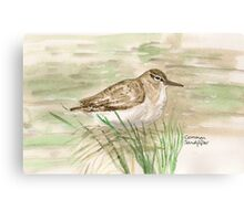 Common Sandpiper Canvas Print