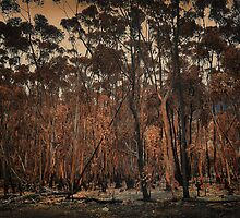Destructive forest fires, Hermanus,SA by Johanna26