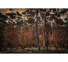 Destructive forest fires, Hermanus,SA Photographic Print