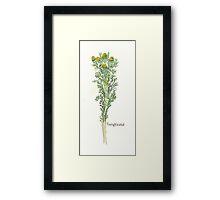 Pineapple Weed Framed Print