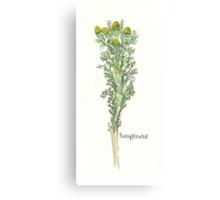 Pineapple Weed Canvas Print