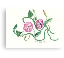 Small Bindweed Canvas Print