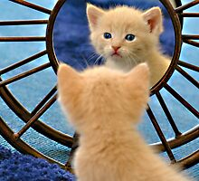 Mirror Mirror... Who's The Cutest Of Them All? by Bill Colman