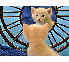 Mirror Mirror... Who's The Cutest Of Them All? Photographic Print