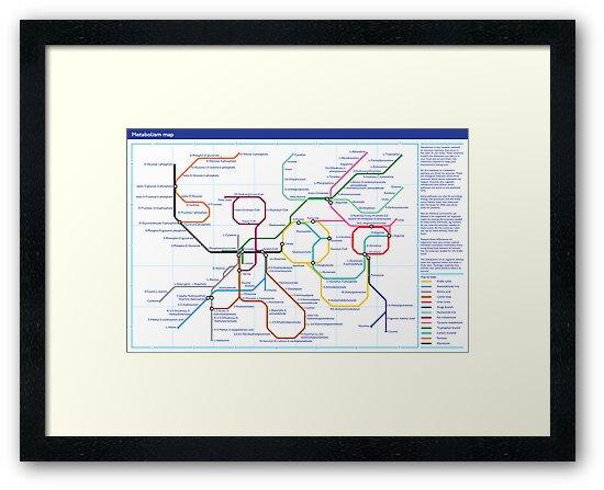 Metabolism - Tube Map by Zephyris
