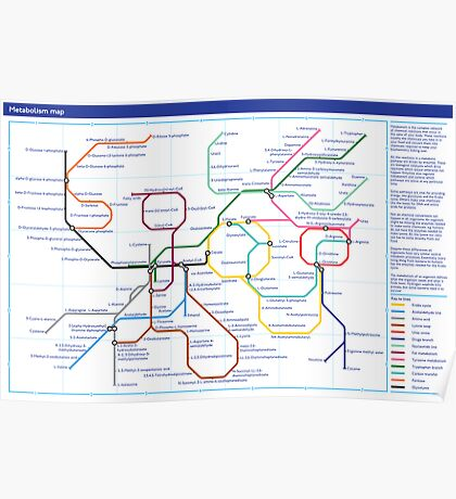 Metabolism - Tube Map Poster