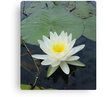 WATERLILY - NYMPHAEA ODORATA  Canvas Print