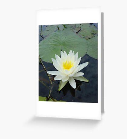 WATERLILY - NYMPHAEA ODORATA  Greeting Card