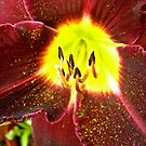 Red Lily by Shulie1
