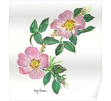 Dog Roses Poster