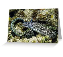 Spotted Moray Eel along the Coral Reef in the Caribbean Greeting Card