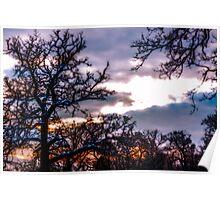 Winter sunset across the treetops Poster