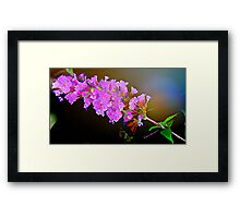 Attracting Blossom Framed Print