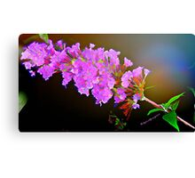 Attracting Blossom Canvas Print