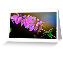 Attracting Blossom Greeting Card