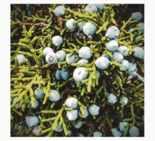 Juniper Tree Study - Berries One Piece - Short Sleeve