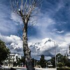 OLD TREE by 126pixels