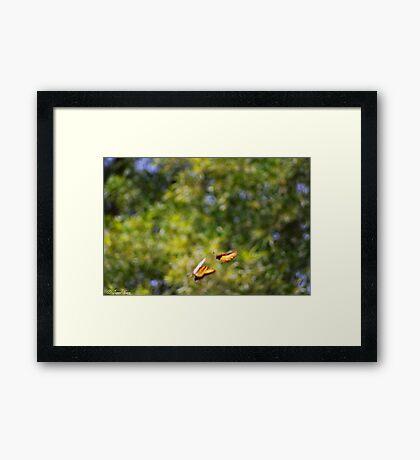 Playful Butterflies  Framed Print