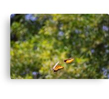 Playful Butterflies  Canvas Print