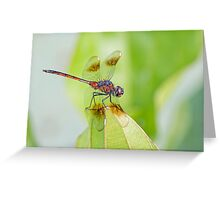 Four Spotted Pennant Dragonfly Greeting Card