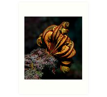 Feather Star Art Print