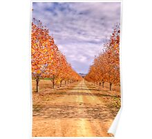 Autumn  Drive - Gulgong,NSW - The HDR Experience Poster