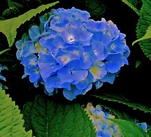 Blue Summer by Lotus0104