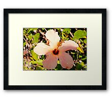 Hibiscus in pixie light Framed Print