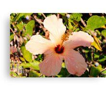 Hibiscus in pixie light Canvas Print