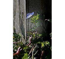 Little Blue Flower Photographic Print