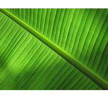 Banana Leaf Photographic Print