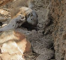 Squirrel vs. Rattler by Kimberly Chadwick