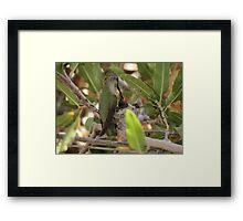 Anna's Hummingbird~ Mothers Touch Framed Print