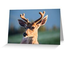Black Tail Buck Greeting Card