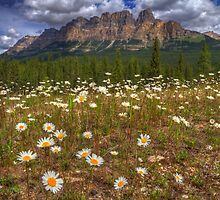 Daisy Castle by JamesA1