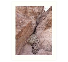 Rocks Caught in a Crevass Art Print