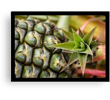 Pineapple Crown  Canvas Print