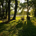Morning Light at Lewinsville Park by Bine